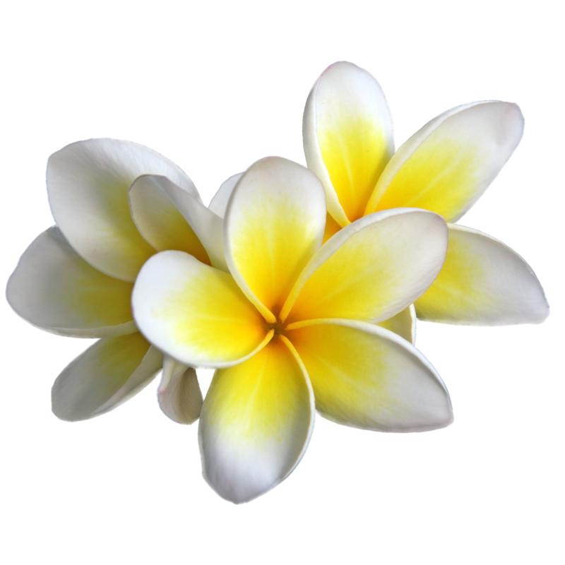Цветок тиаре.